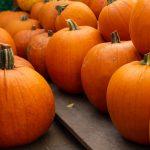 Entertainment: A Pumpkin Patch Pop-up