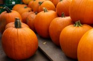 Pumpkins. (Pixabay License).